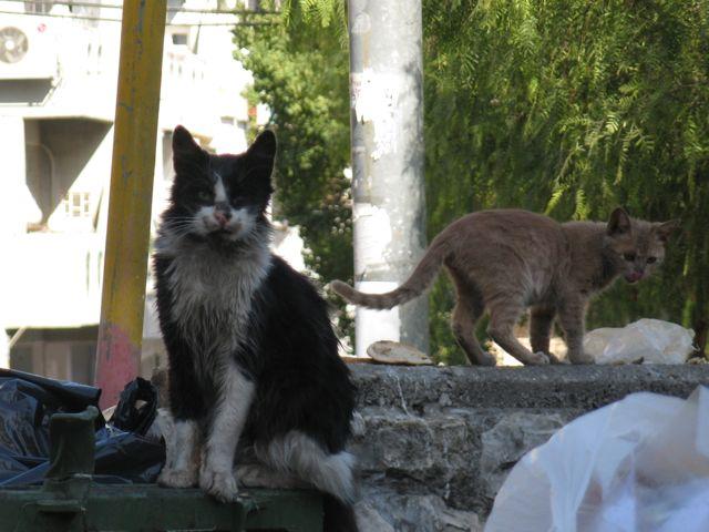 1-dumpstercat