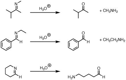 Hydrolysis of imines to give ketones (or aldehydes) — Master Organic ...