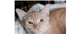 We Sponsored A Cat!