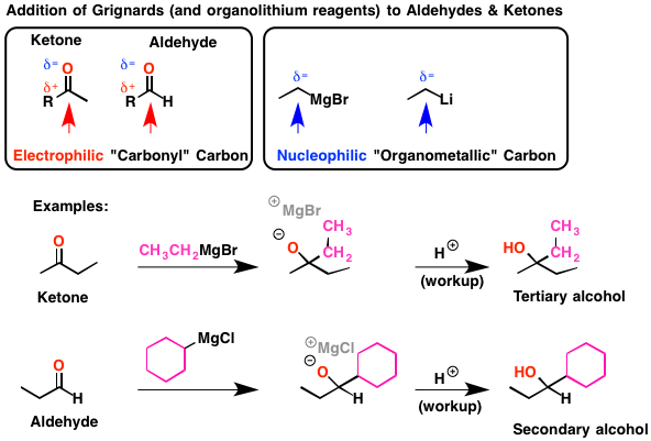 Ester Ring  Carbons