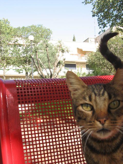 1-cat1