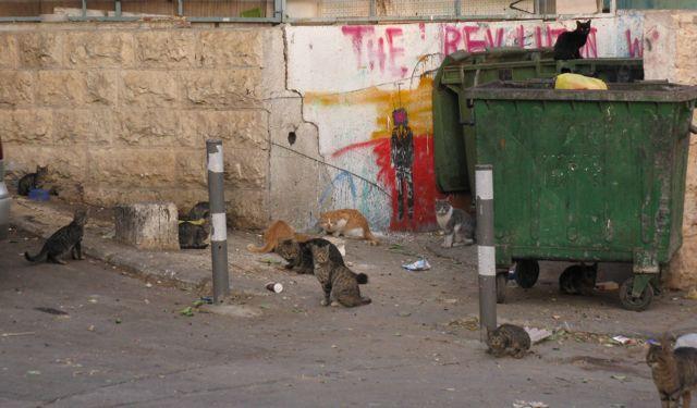 8-dumpster cats